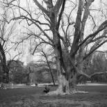 冕葉 - 也斯 相信長遠的等待 可以聽見花葉的呼息, 我沉重而笨拙 受挫於泥濘。