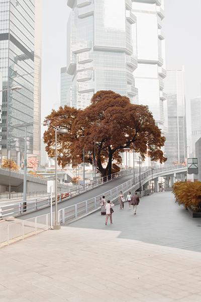 Metropolis Chlorophyll,  Image courtesy of Siu Wai Hang