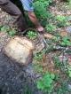 了解可持續伐木業的運作。